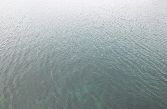 「 チヌ ( 黒鯛 ) 釣り入門 」 0267