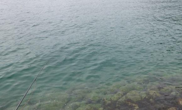 「 チヌ ( 黒鯛 ) 釣り入門 」 0289