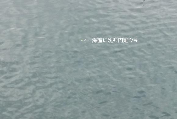 「 チヌ ( 黒鯛 ) 釣り入門 」 0341
