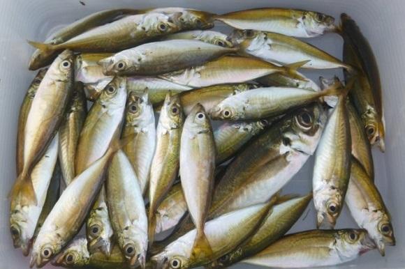 「 チヌ ( 黒鯛 ) 釣り入門 」 0355