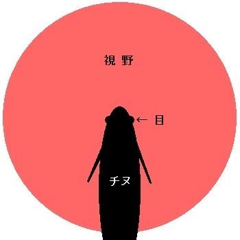 「 チヌ ( 黒鯛 ) 釣り入門 」 0410