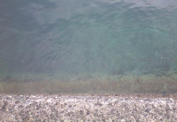 「 チヌ ( 黒鯛 ) 釣り入門 」 0420