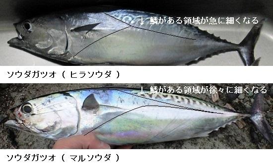 「 チヌ ( 黒鯛 ) 釣り入門 」 0448
