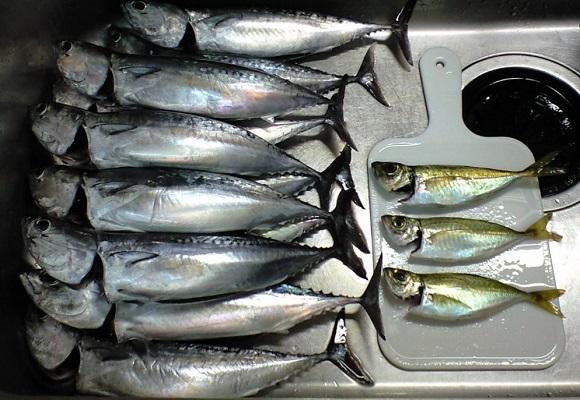 「 チヌ ( 黒鯛 ) 釣り入門 」 0450