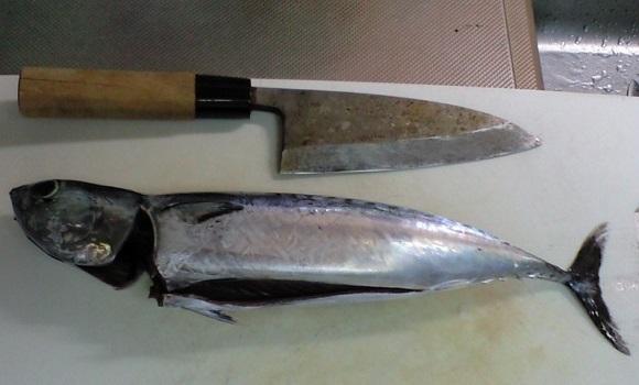 「 チヌ ( 黒鯛 ) 釣り入門 」 0452