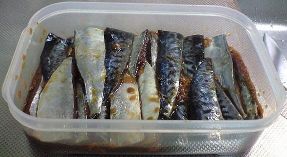 「 チヌ ( 黒鯛 ) 釣り入門 」 0456