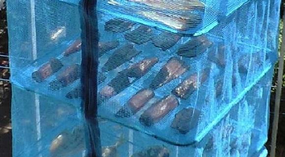 「 チヌ ( 黒鯛 ) 釣り入門 」 0459