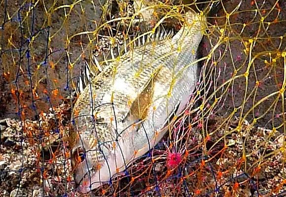 「 チヌ ( 黒鯛 ) 釣り入門 」 0482