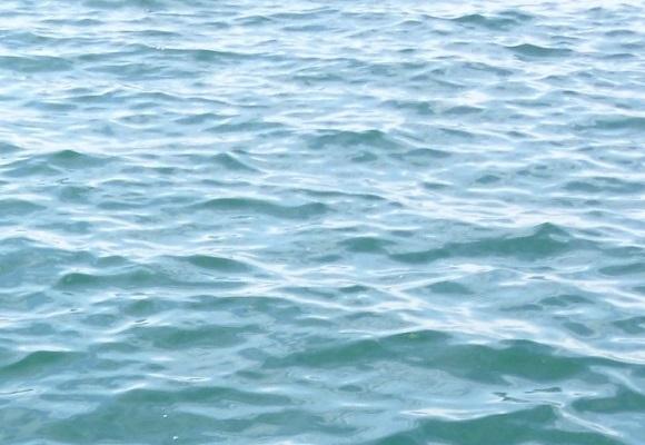 「 チヌ ( 黒鯛 ) 釣り入門 」 0500
