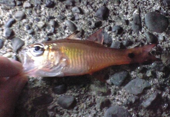 「 チヌ ( 黒鯛 ) 釣り入門 」 0508