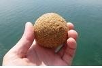 チヌ ( 黒鯛 ) 釣り入門 チヌ ( 黒鯛 ) の紀州ダンゴ釣り.jpg