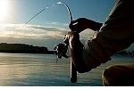 チヌ ( 黒鯛 ) 釣り入門 ブログ管理人の海釣り釣行記.jpg