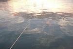 チヌ( クロダイ )が釣れる場所「 釣り場で見られる傾向のまとめ 」.jpg
