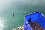 チヌ( クロダイ )のカゴ釣り「 仕掛けやコマセと釣り方を徹底解説 」.jpg