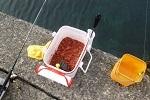 チヌ( クロダイ )のフカセ釣り「 釣り場に対応した仕掛けの作り方 」.jpg