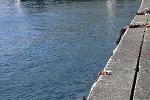 チヌ( クロダイ )のフカセ釣りと紀州釣り「 有利な釣り座の選び方 」.jpg