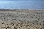 チヌ( クロダイ )の渚釣り釣法「 仕掛けの作り方や釣り方のコツ 」
