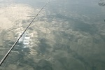 チヌ( クロダイ )の紀州釣り「 ウキなしの仕掛けの作り方と釣り方 」.jpg