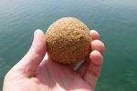 チヌ( クロダイ )の紀州釣り「 ダンゴで本命アタリが近い前兆現象 」.jpg