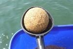 チヌ( クロダイ )の紀州釣り「 困った時の対処方法と釣り方のコツ 」.jpg
