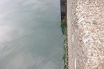 チヌ( クロダイ )の紀州釣り「 堤防および波止のヘチを狙う釣り方 」.jpg