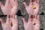 チヌ( クロダイ )釣り「 フカセ釣りや紀州釣りの刺し餌の付け方 」.jpg