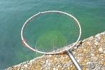チヌ( クロダイ )釣りの磯玉網( タモ網 )の使い方やタモ入れのコツ.jpg