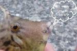 厄介なエサ取りワーストランキング|管理人の釣りコラム Vol.7.jpg