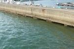 防波堤( 堤防や波止 )で釣れる魚の種類とチヌ( クロダイ )のタナ.jpg